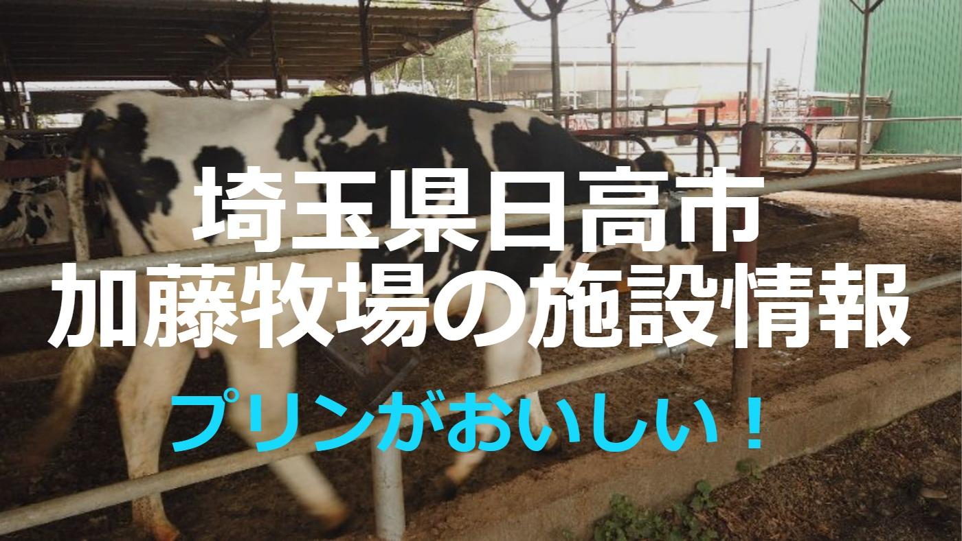 プリンが美味しい!日高市の加藤牧場にいってきました【埼玉県】