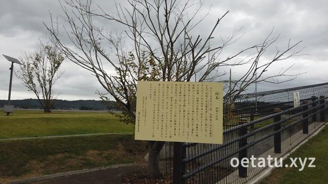 道の駅ましこ桜